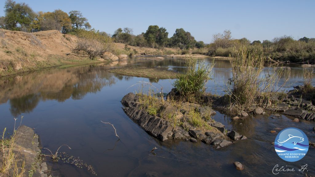 The Sabie River in KNP