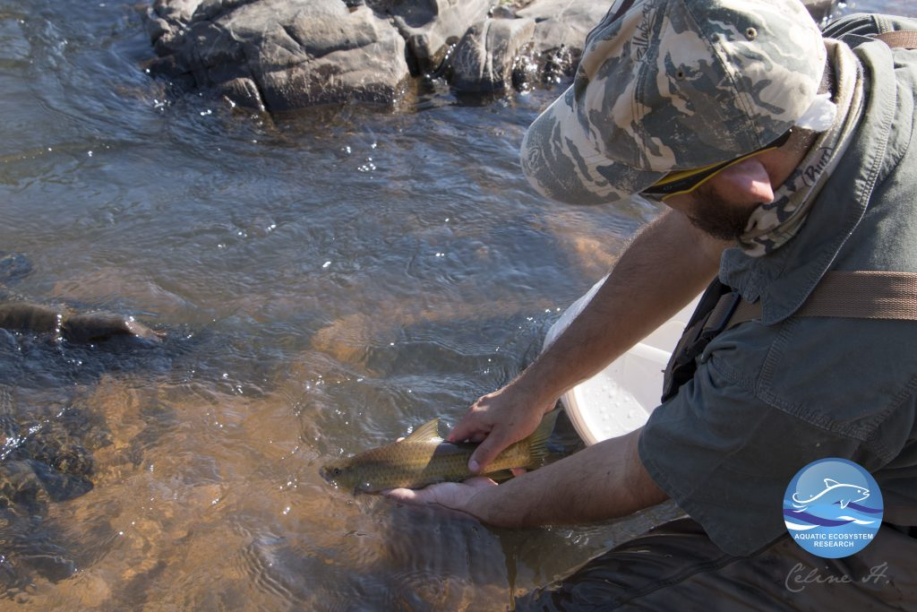 Mahomed releasing a yellowfish in the Sabie